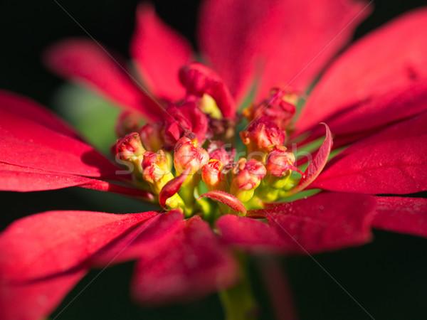 Vermelho macro tiro verde Foto stock © mroz