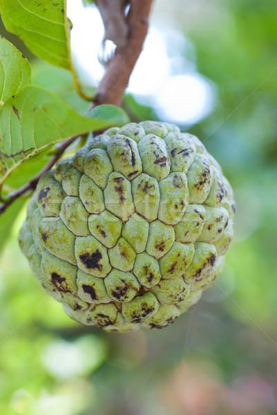 заварной крем яблоко фрукты зеленый продовольствие Сток-фото © mroz