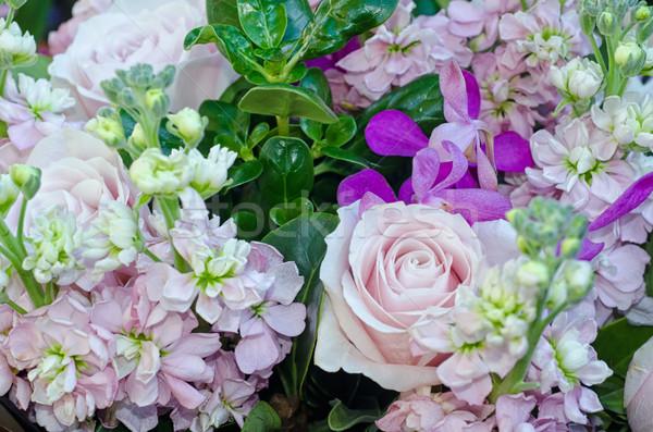 Atış güller az diğer Stok fotoğraf © mroz