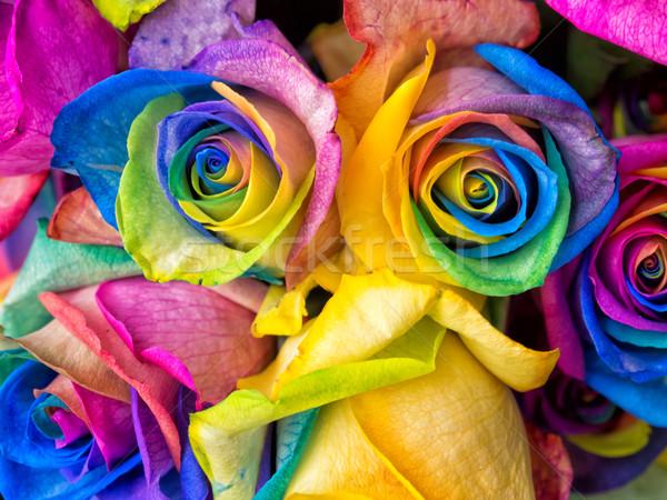 Arco-íris rosas rosa colorido macro Foto stock © mroz
