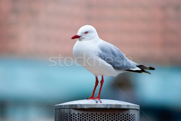 Seagull standing on a metal pole Stock photo © mroz