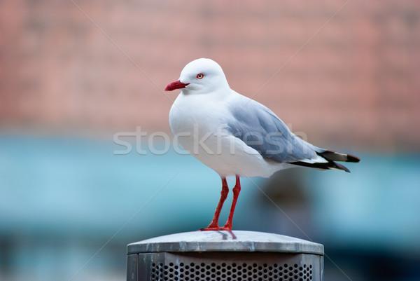чайка Постоянный металл полюс стоянки красный Сток-фото © mroz