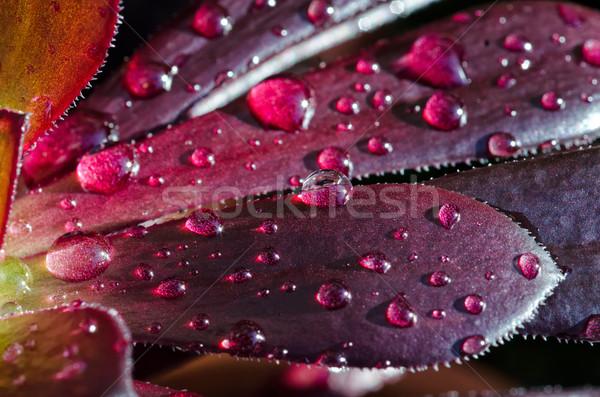 сочный макроса выстрел воды красоту Сток-фото © mroz