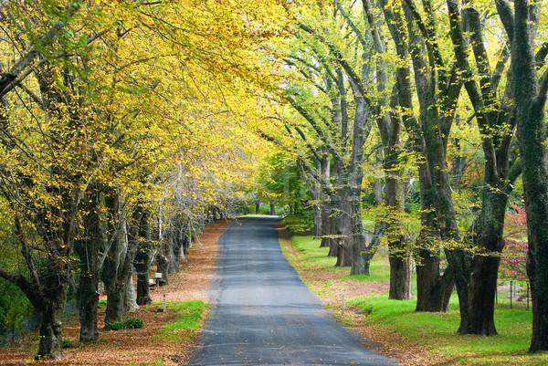 ストックフォト: 秋 · 道路 · 金 · カラー · ツリー · 行