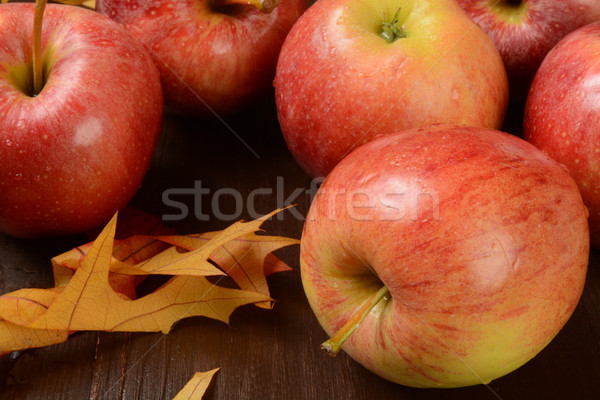 Gala apples Stock photo © MSPhotographic