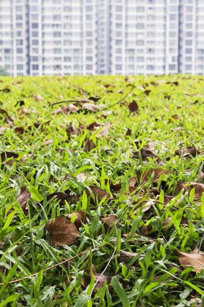 Fűmező előtér lakásügy fű építkezés zöld Stock fotó © mtkang