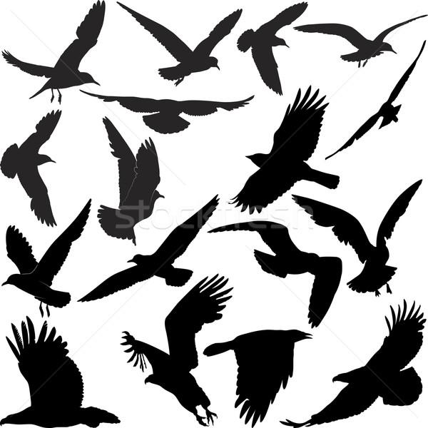birds Stock photo © mtmmarek
