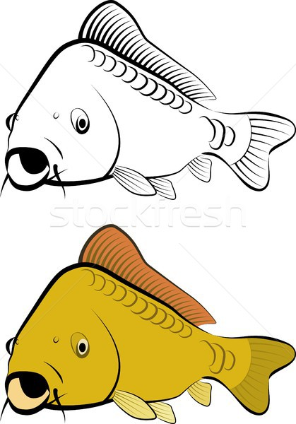carp Stock photo © mtmmarek