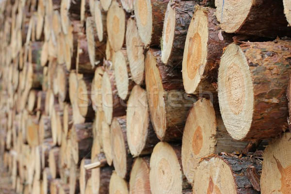 Fa köteg fából készült háttér labda közelkép Stock fotó © mtmmarek