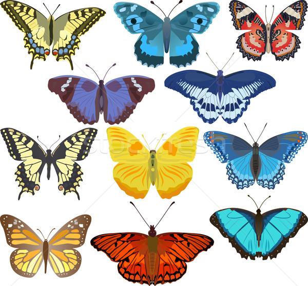 красочный бабочки набор темам весны лет Сток-фото © mtmmarek