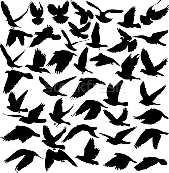 Pombo conjunto silhuetas corpo pena preto Foto stock © mtmmarek