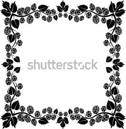 Komló keret sör levelek sziluett növény Stock fotó © mtmmarek