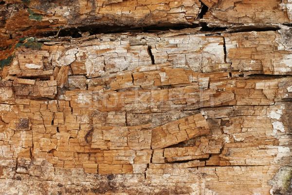 гнилой древесины фон кадр Vintage шаблон Сток-фото © mtmmarek