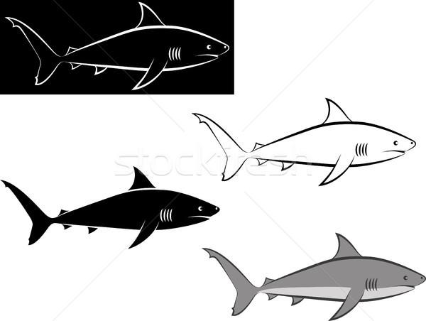 Haai geïsoleerd clip art illustratie lijn kunst Stockfoto © mtmmarek