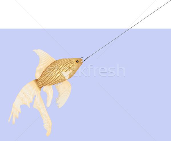 金魚 魚 海 釣り 金 海洋 ストックフォト © mtmmarek