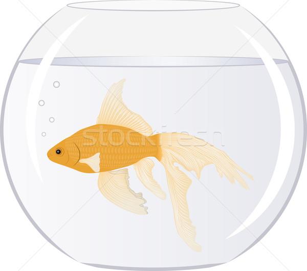 Goldfish ciotola bolle mare sfondo oro Foto d'archivio © mtmmarek