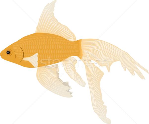 goldfish Stock photo © mtmmarek
