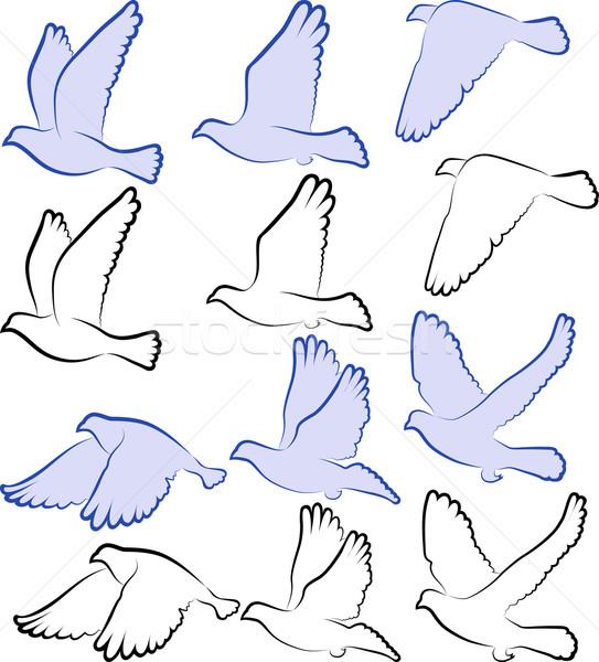 Güvercin ayarlamak siluet vücut tüy uçmak Stok fotoğraf © mtmmarek