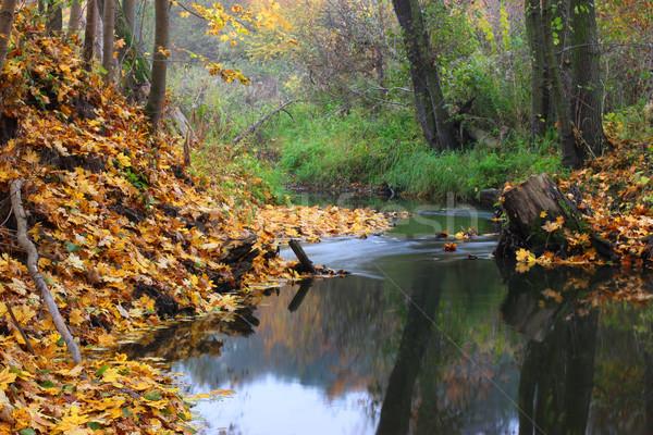 ősz tájkép folyam erdő víz fa Stock fotó © mtmmarek