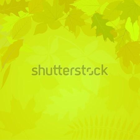 Bladeren groene bladeren achtergrond vallen heldere achtergrond Stockfoto © mtmmarek