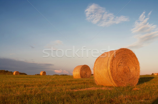 Domaine coucher du soleil alimentaire herbe ferme pays Photo stock © mtoome