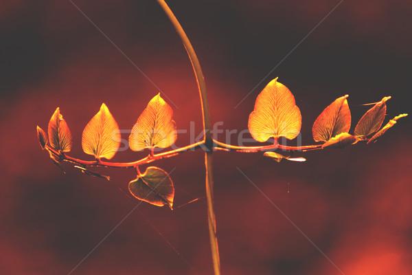 Eğreltiotu akşam güneş iş yaprak yeşil Stok fotoğraf © muang_satun