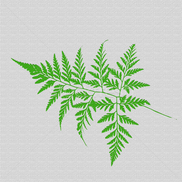 Green ferns  leaf  texture   Stock photo © muang_satun