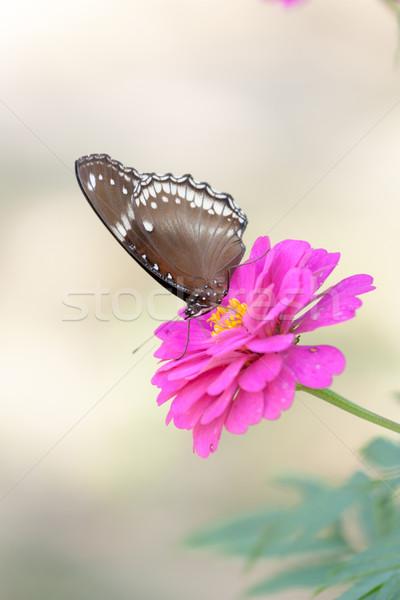 Foto stock: Borboleta · flor · natureza · jardim · cama · terra