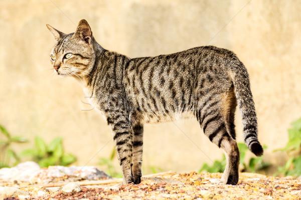 cat Stock photo © muang_satun