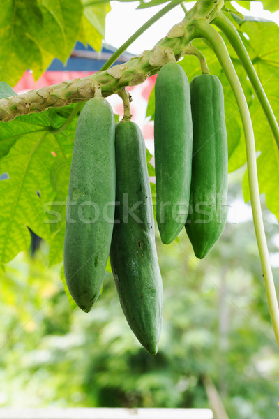 ストックフォト: 植物 · 便利 · 多くの · 物事 · ツリー · 葉