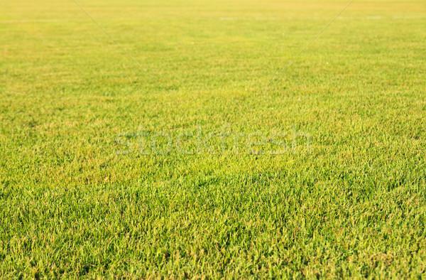 çim alanı sabah bahar çim doğa arka plan Stok fotoğraf © muang_satun