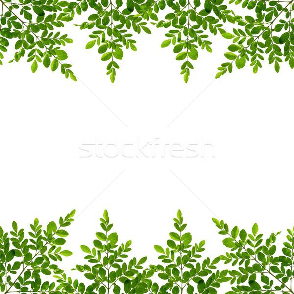 Yaprakları yeşil yaprakları beyaz arka plan Stok fotoğraf © muang_satun