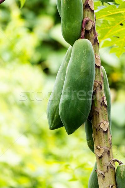 papaya Stock photo © muang_satun