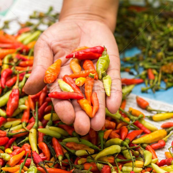 pepper Stock photo © muang_satun