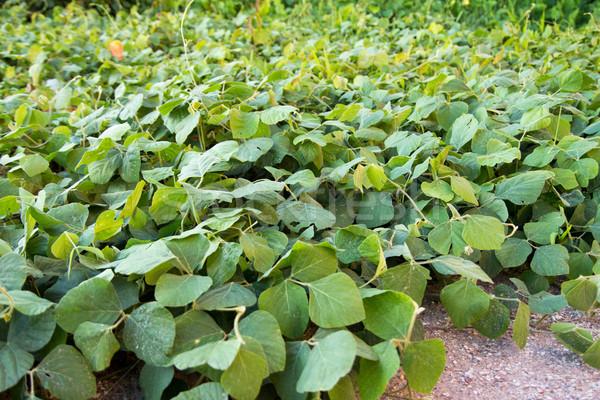 カバー 作物 水分 土壌 制御 ストックフォト © muang_satun