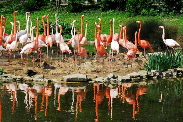 Groupe banque étang nature oiseau vert Photo stock © Musat