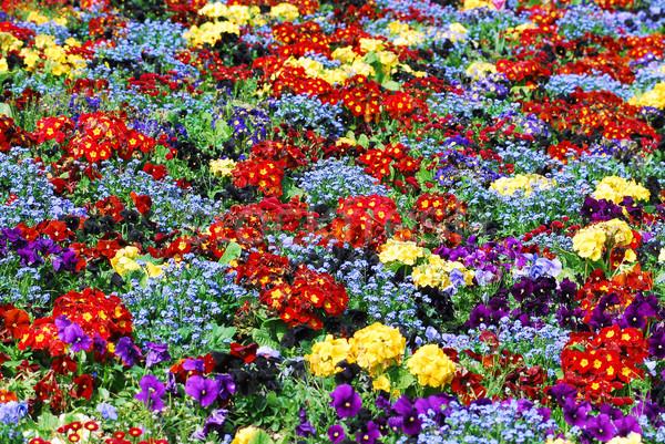 Bed Rood Geel Blauw bloem Stockfoto © Musat