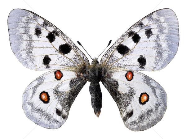 Isolé papillon blanche nature rouge noir Photo stock © Musat