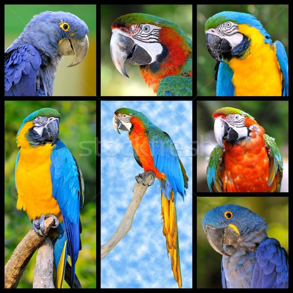 Mozaik fotoğrafları yedi mavi tüy Stok fotoğraf © Musat