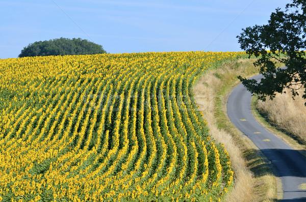 Zonnebloem veld luchtfoto Frankrijk afdeling bloem Stockfoto © Musat