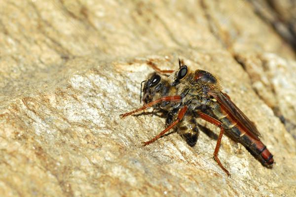 Abeille Rock nature animaux miel insecte Photo stock © Musat