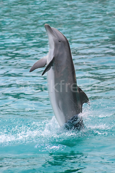 Dolphin standing on water Stock photo © Musat