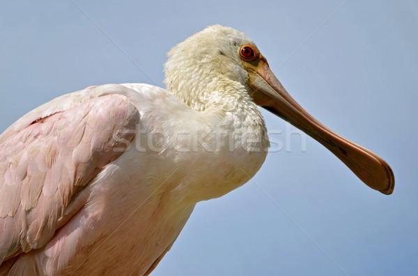 Blauwe hemel oog natuur vogel Blauw Stockfoto © Musat