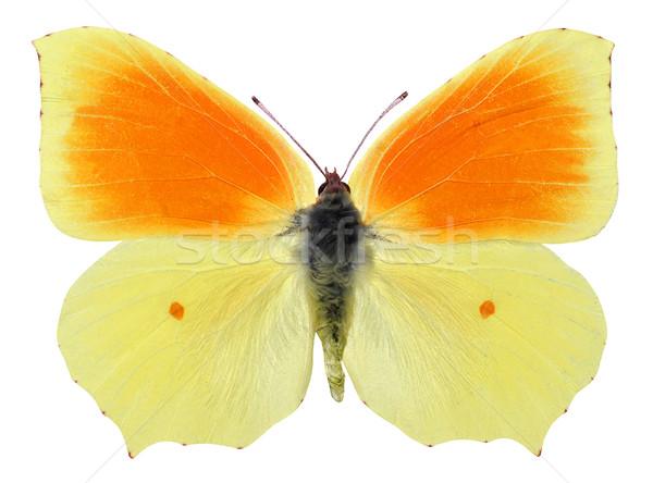 Yalıtılmış kelebek makro erkek beyaz doğa Stok fotoğraf © Musat