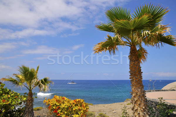 Palmeira mar tenerife arbusto barco sudoeste Foto stock © Musat
