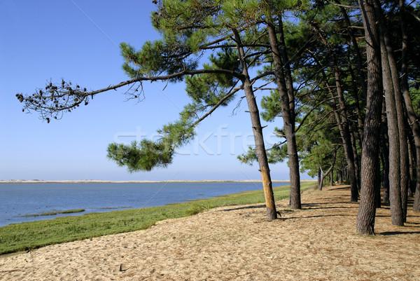 Foto stock: Praia · la · França · costa · região · madeira