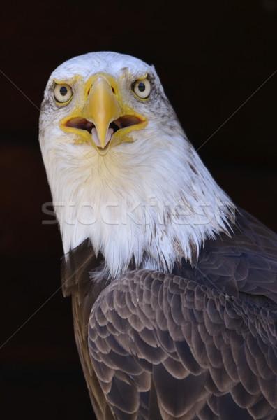 Portre Afrika balık kartal göz kuş Stok fotoğraf © Musat