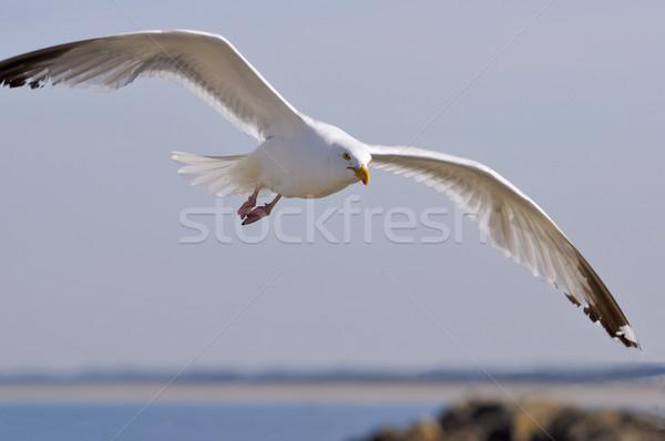 Uçmak görmek yüz doğa deniz Stok fotoğraf © Musat