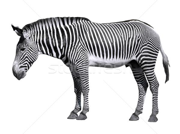 Geïsoleerd zebra profiel witte oog paard Stockfoto © Musat