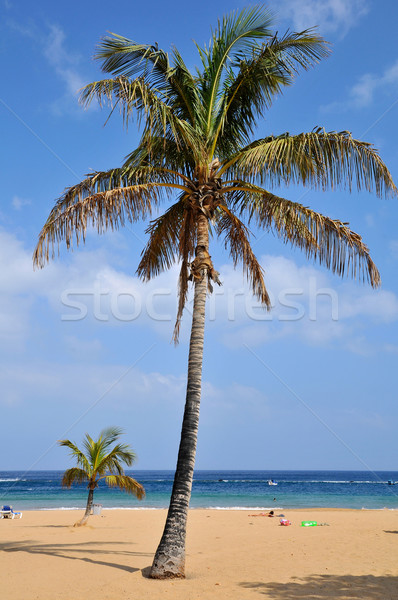 Hurma ağacı plaj tenerife İspanyolca doğa Stok fotoğraf © Musat
